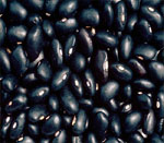 Black Gram Seeds Vijapur, Black Gram Seed Manufacturer Vijapur, Black Gram Seeds Gujarat, Black Gram Seed Manufacturer Gujarat, Black Gram Seeds India, Black Gram Seed Manufacturer India