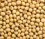 soybeans seeds vijapur, soybeans seed manufacturer vijapur, soybeans seeds gujarat, soybeans seed manufacturer gujarat, soybeans seeds india, soybeans seed manufacturer india